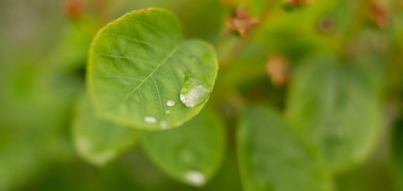 Le bonsaï :  Désir et peur de liberté